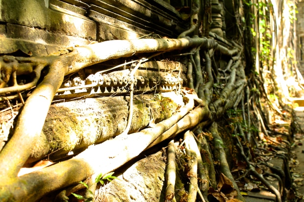 The roots captivate you and lead you through one corridor to the next.